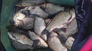 Рыбалка. Ловля крупного карася на макушатник.