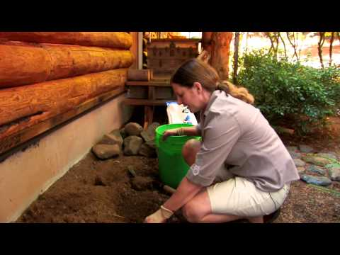 How to Improve Bad Soil for Gardening