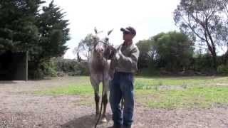 Worming the hard to worm horse