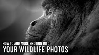 How to Add Emotion Into Your Wildlife Photography: 5 Tips with Kristi Odom