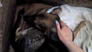 Винница! Помогите собрать средства на лечение собаки Маши!!!