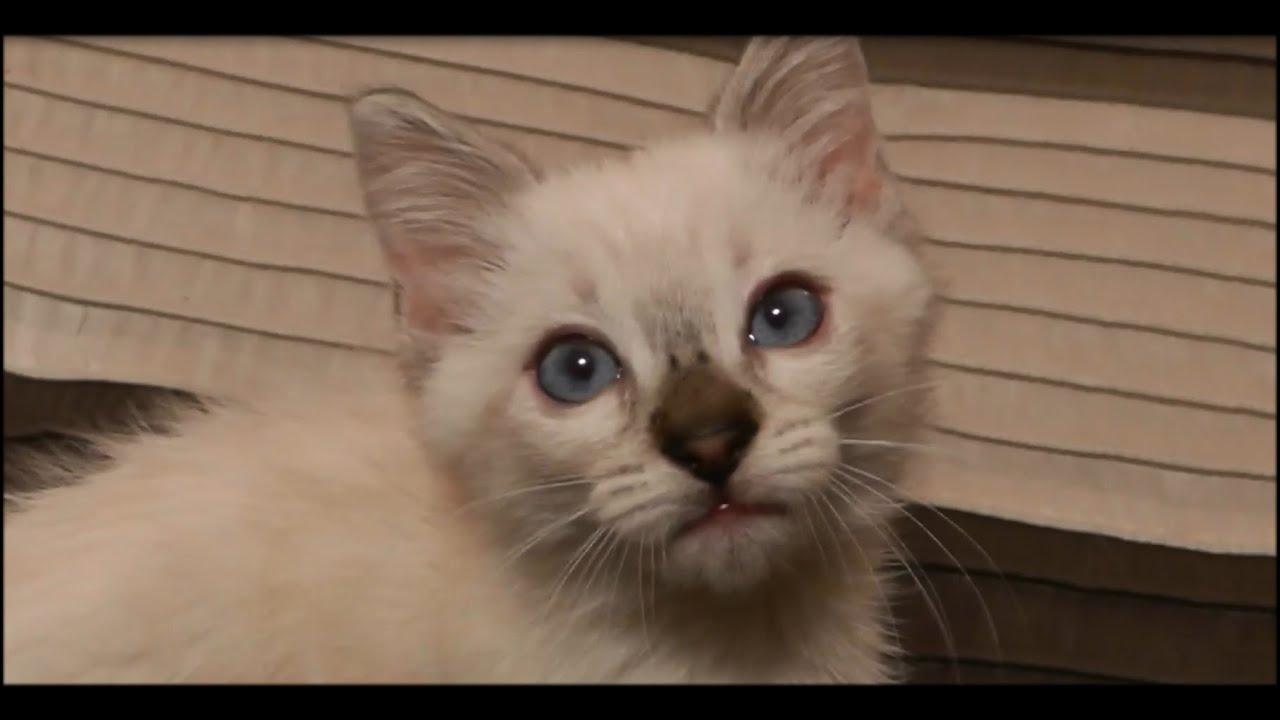 Cat Vs the Ceiling Fan - YouTube