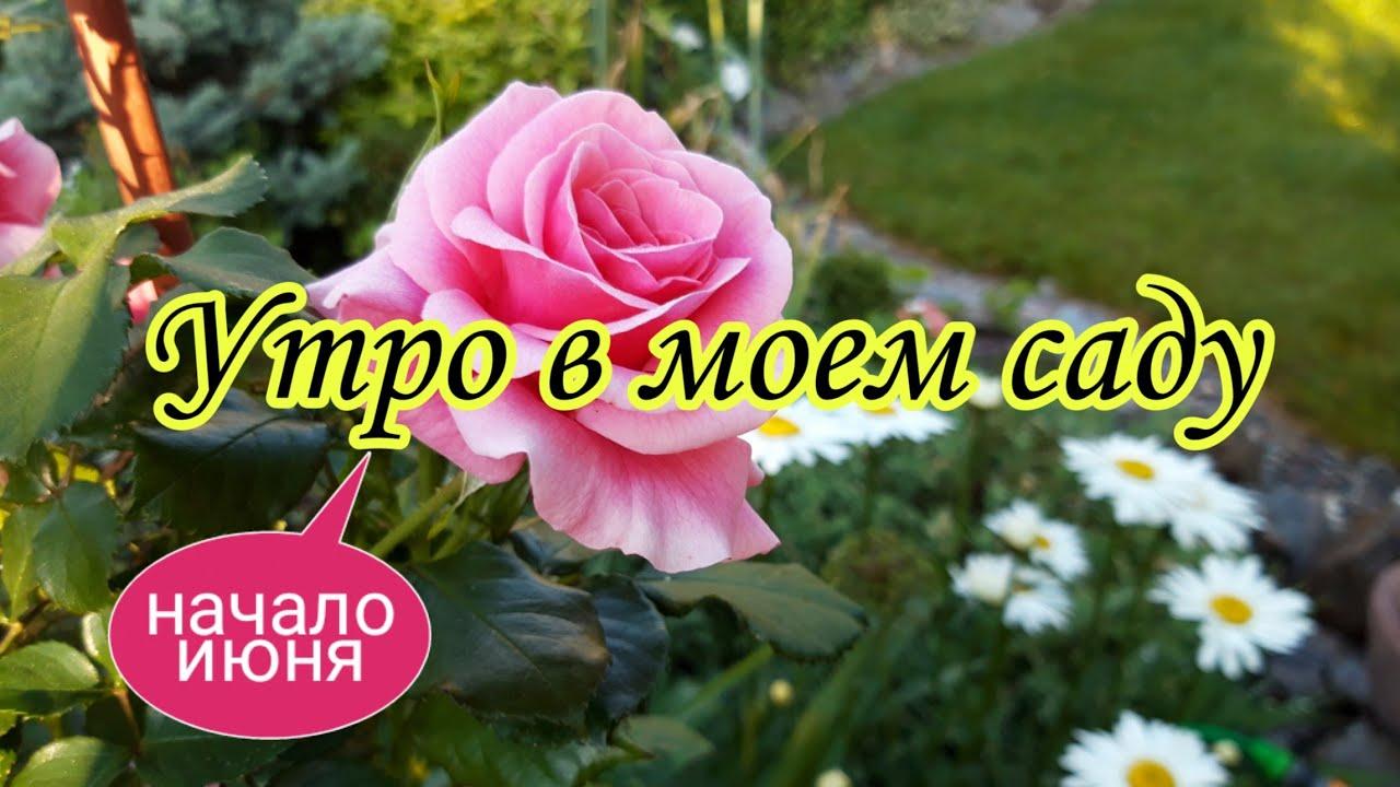 Утро в моём саду.Мой сад в начале июня.Красивый сад.Дача.Красивые цветники своими руками. Сад .