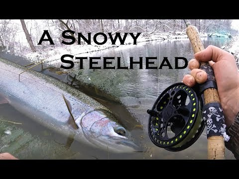 A Snowy Steelhead