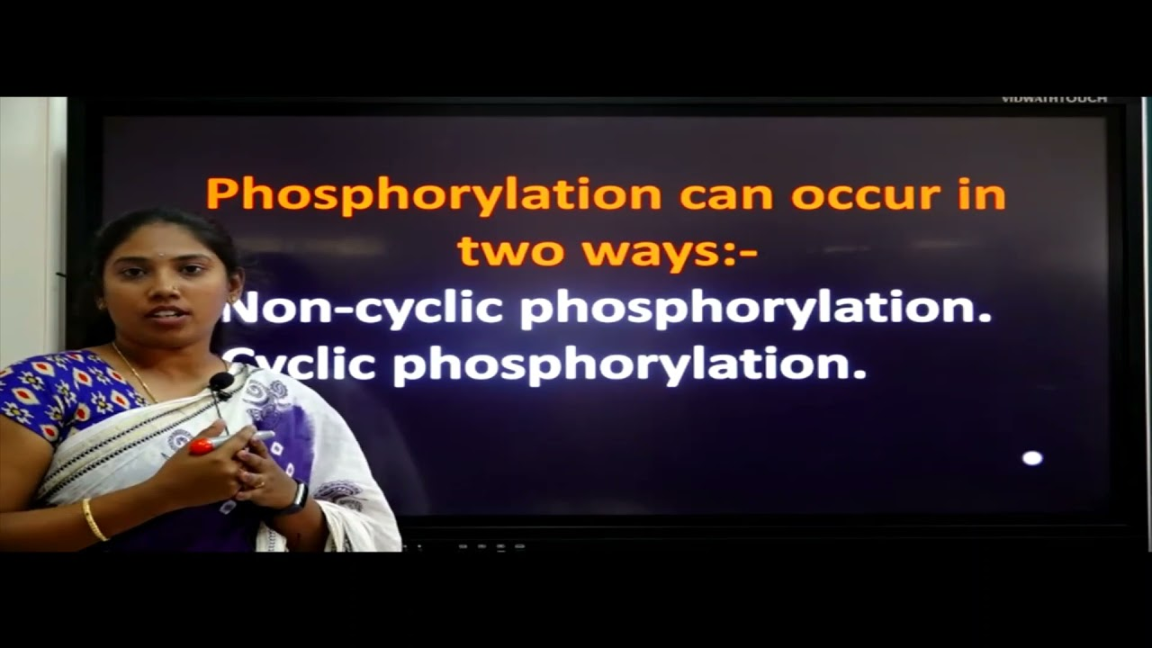 I PUC | Biology | Photosynthesis in higher plants- 03