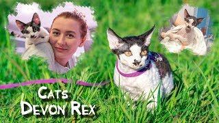 Рассказ котенка Девон Рекс. Дом, улица, ванна | Devon Rex