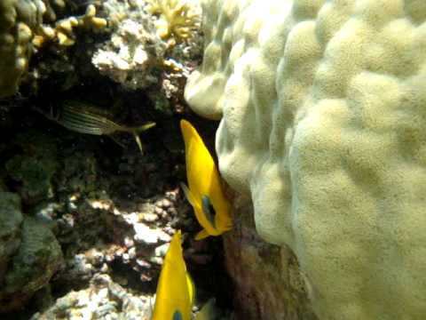 resta, reef, snorkeling, marsa, alam, el, nurkowanie, diving, scuba, underwater, unterwasser, tauchen
