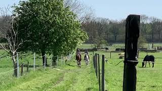 Spring at Oakley Horses Palme und Balousarini with their new owners