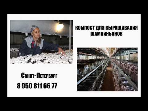 мицелий гриба купить в санкт-петербурге