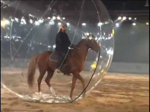 Dubai Int Horse Fair Ceremony