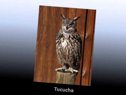 Tucucha - Conjunto
