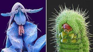 Невероятные Фото, Сделанные Под Микроскопом