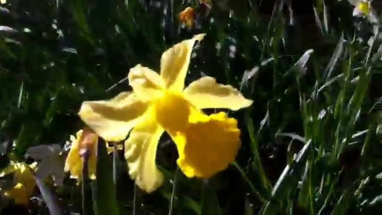 Beautiful Flower In Spring Season With Natural Birds Sound Youtube