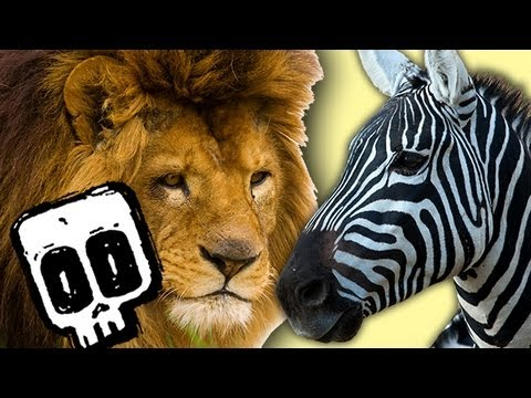 Lion vs Zebra | Deadliest Showdowns (Ep 12) | Earth Unplugged thumbnail