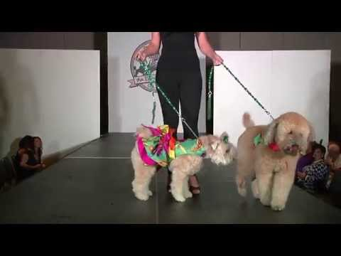 GA SPCA Doggy Fashion Show 2014