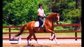 "Fire and Ice ""Fin"" 7yr old 16.2h Gelding for sale!"