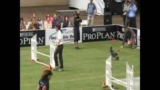 Purina Incredible Dog Challenge 2012, Maizey's Agility Round 2