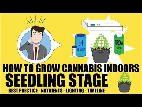Cannabis Seedling Stage - How to grow marijuana course for dummies - Growing Cannabis Indoors 101