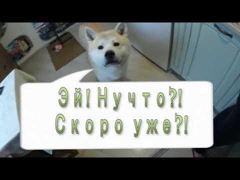 Как высушить говяжье легкое для собаки в духовке