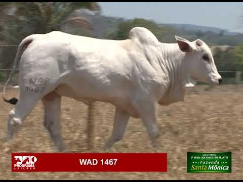 LOTE 42 - WAD 1467
