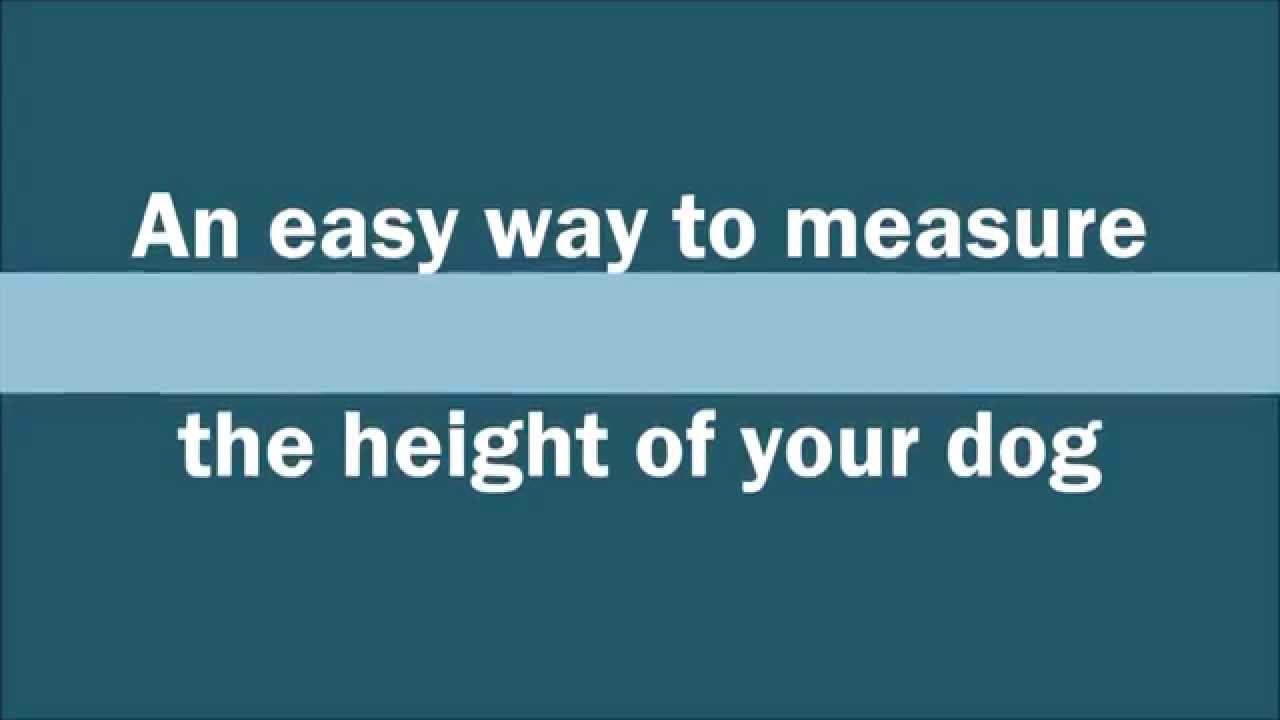 an easy way to measure the height of your dog [ 1280 x 720 Pixel ]