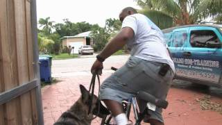 Dog Training Tips : How To Bike With Your Dog Safely