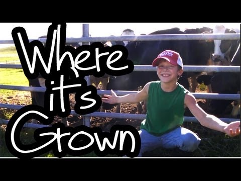 """Where it's Grown"" - Lil Fred, ""Cups"" Parody - Anna Kendrick ""When I'm Gone"""