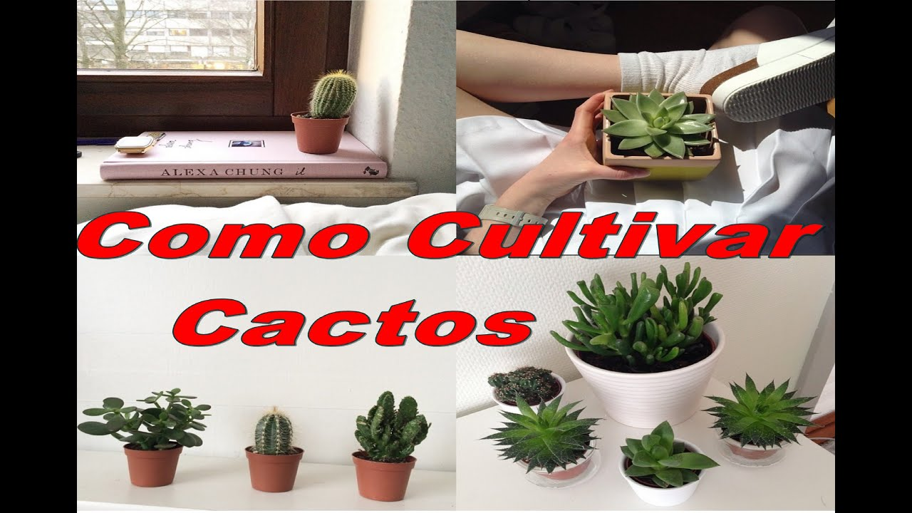 Mondini plantas como cultivar cactos youtube for Como cultivar plantas ornamentales