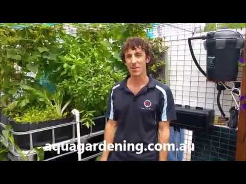 Aquaponics 2 metre Air Lift Pump