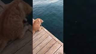 Kediye balık vermek yerine tutmayı öğretmişler