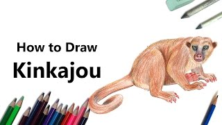 How to Draw a Kinkajou with Color Pencils [Time Lapse]