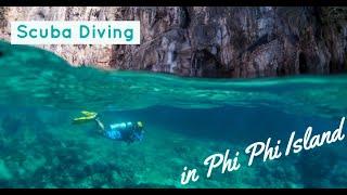 What is like scuba diving in Koh Phi Phi?  REEF SHARKS in Phi Phi