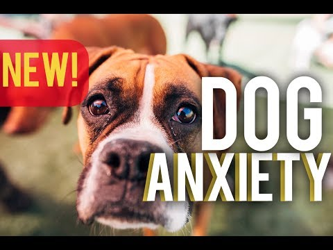 STOP Dog anxiety - an In depth look at how to STOP dog anxiety! - with America's Canine Educator