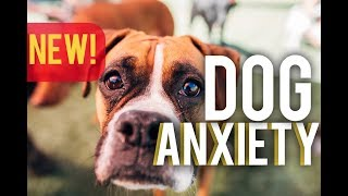 STOP Dog anxiety  an In depth look at how to STOP dog anxiety!  with America's Canine Educator