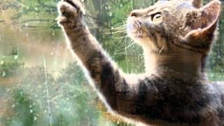 ProShow Producer. Осень рыжая кошка
