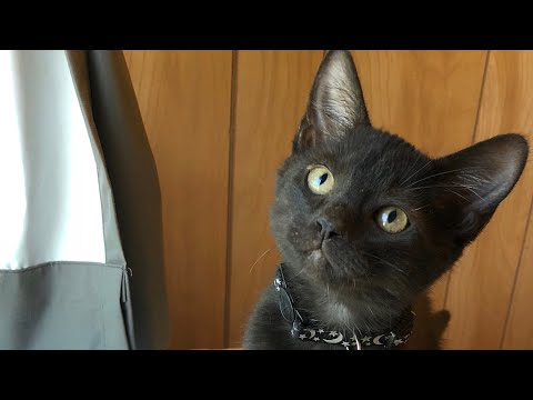 How to Give Kittens Meds and Clip Nails! Foster Kittens Update!