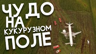 Чудо на кукурузном поле | Хорошие Истории