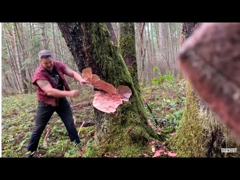 Logger - cutting down big tree with axe - tips