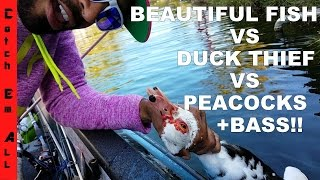 FIGHTING DUCKS AND CATCHING FISH! with guide @Drews_Bait_shack