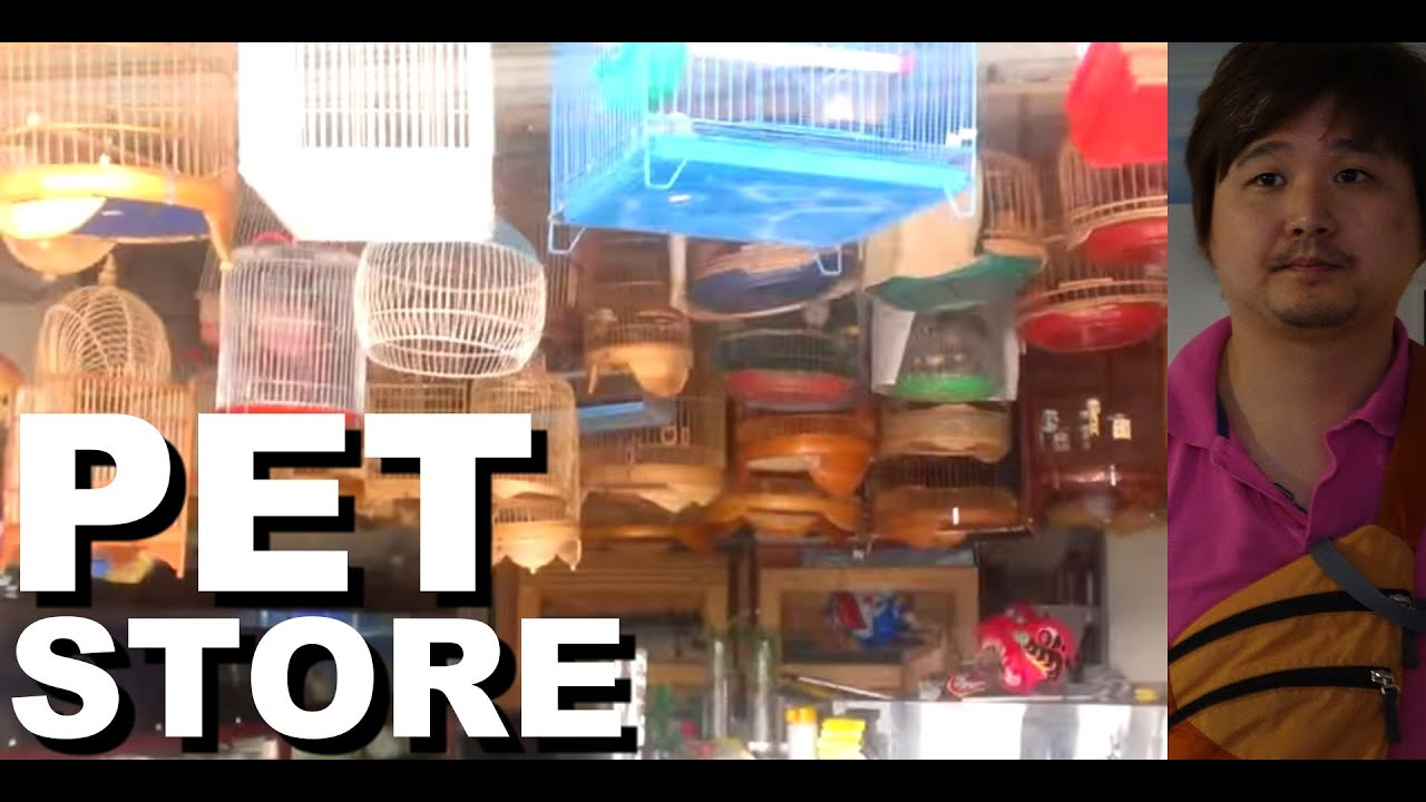 Asian pet store in vietnam birds and fish youtube for Pet stores that sell fish