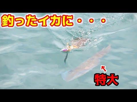 釣��イカ�怪物���������