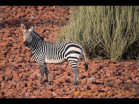 Safari & Travel Photography TIPS - Long lens shooting in Africa with Tamron 150-600mm