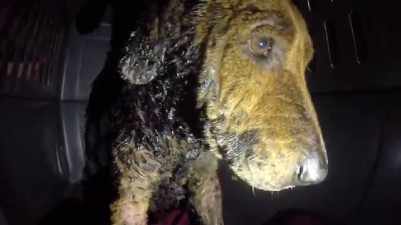 Image result for The Kind Of Terror This Dog Went Through Before Rescue Is Just Heartbreaking!