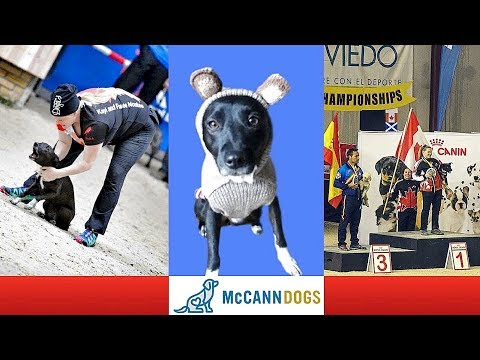 The Most Unlikely World Champion Mutt- Funkee Monkee And Kayl McCann /Dog Vlogs Episode 22/