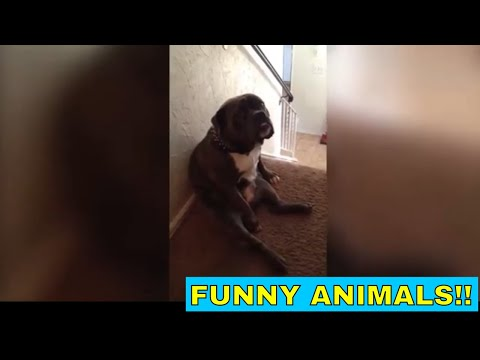 Funny and cute animal videos #2