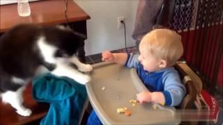 Подборка смешные домашние животные