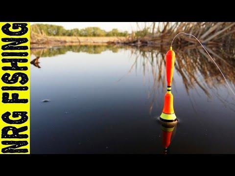 Рыбалка на крупного карася в тихой заводи | невозможно оторвать глаз от поплавка