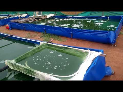 Sv Spirulina farms