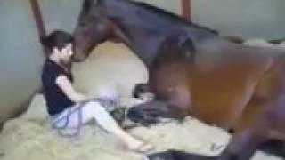 Лошадь-лучший друг