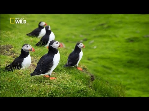 National Geographic - Secret Island in the Middle of the Atlantic Ocean - New Documentary HD 2017